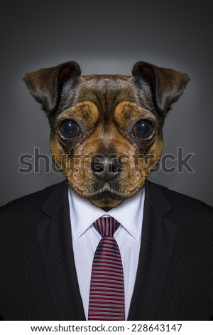 Cute little brown dog in a suit - stock photo