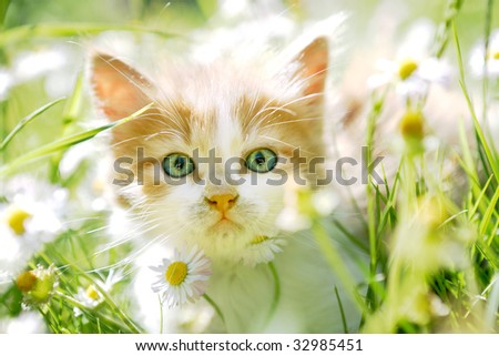 Cute little cat in spring flowers and grass, looking at the camera - stock photo