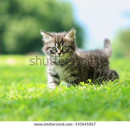 Cute little cat playing on the grass - stock photo