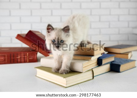 Cute little cat with books on light background - stock photo