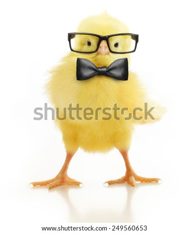 Cute little chicken in black eye glasses and bow isolated on white background - stock photo