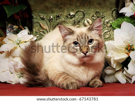 cute little Christmas cat - stock photo