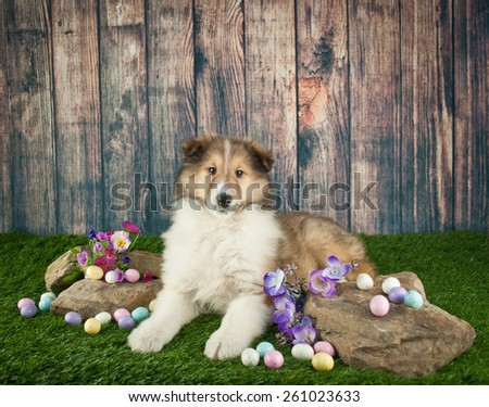 Cute little Collie puppy laying in the grass with rocks and spring flowers around her. - stock photo