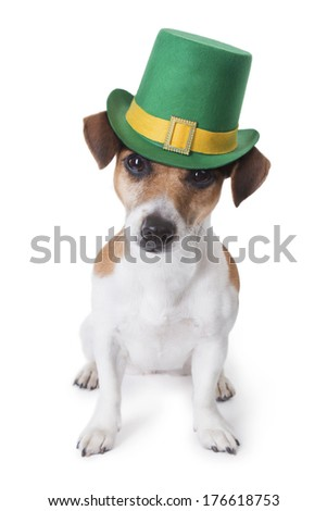 cute little dog jack russell terrier in a green St. Patrick's hat looking at the camera. White backgrond. Studio shot - stock photo