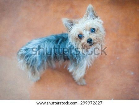 Cute little dog looking at the camera - stock photo