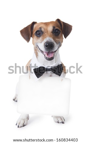 Cute little dog sitting with bow tie and a white collar with a signboard  around his neck, where you can post your information. White background. Studio shot - stock photo