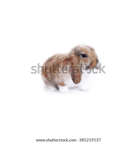cute little easter bunny - stock photo