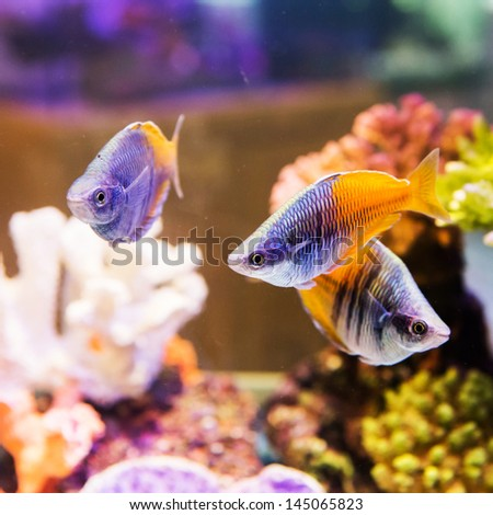 cute little fish in an aquarium - stock photo