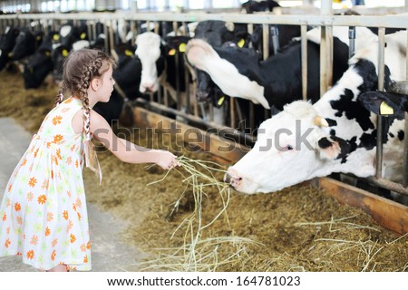 Cute little girl in dress gives hay for cow in long stall. Focus on girl. - stock photo