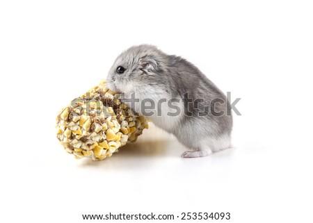 cute little hamster eating - stock photo