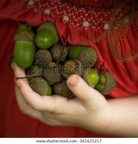 Cute little hand Hand Holding green  oak nut acorns Phrase The taller oak tree in the forest was once just a tiny nut that held its ground Boho style - stock photo