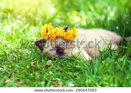 Cute little kitten crowned with a chaplet of dandelion lying on the grass - stock photo