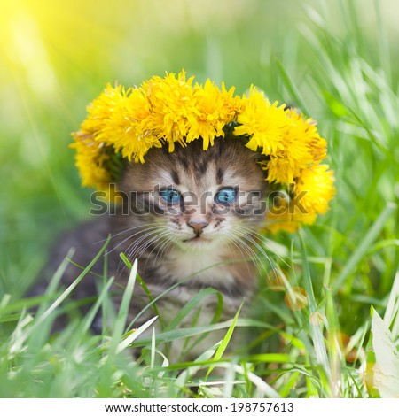 Cute little kitten crowned with a chaplet of dandelion walking in the grass - stock photo