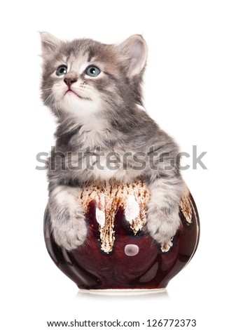 Cute little kitten in a clay cooking pot  isolated on white background - stock photo