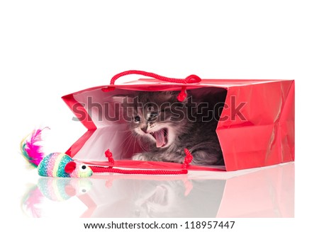 Cute little kitten in a gift bag isolated on white background - stock photo