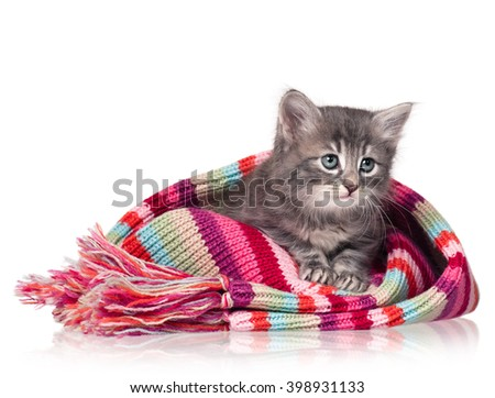 Cute little kitten in a warm knitted scarf isolated on a white background - stock photo