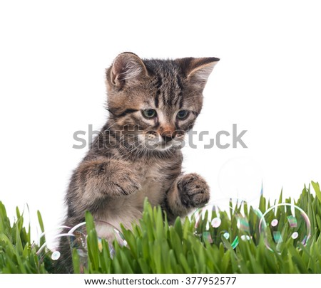 Cute little kitten in the bright green grass over white background - stock photo