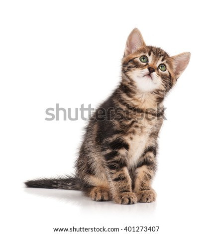 Cute little kitten isolated on a white background cutout - stock photo