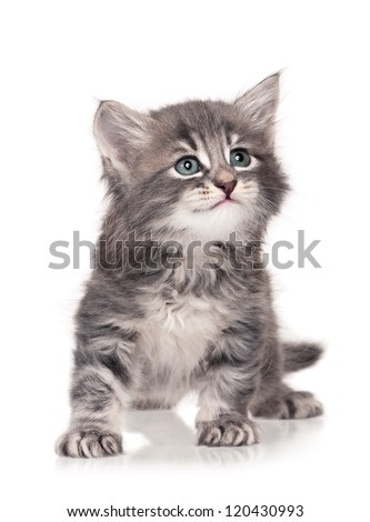 Cute little kitten isolated on white background - stock photo