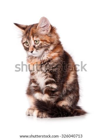 Cute little kitten, isolated on white background  - stock photo