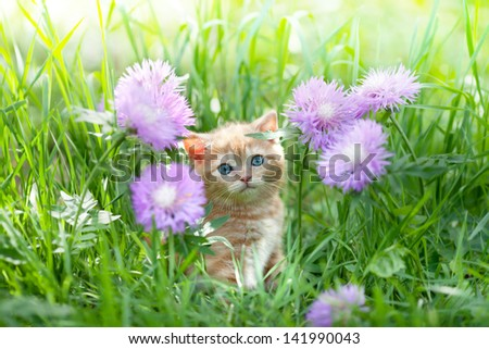 Cute little kitten sitting in flowers on the grass - stock photo
