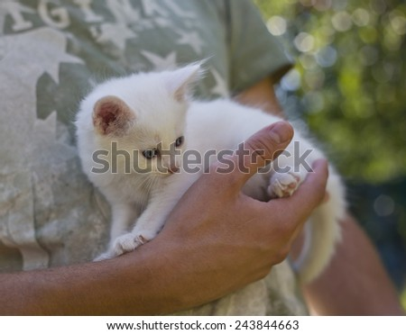 cute little kitten sitting on the palm of a man - stock photo