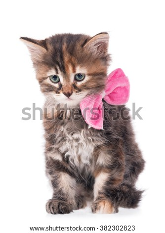 Cute little kitten  with a plush bow on a neck on a white background cutout - stock photo