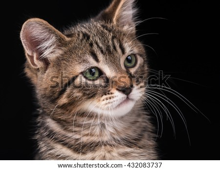 Cute little kitten with green eyes over black background - stock photo