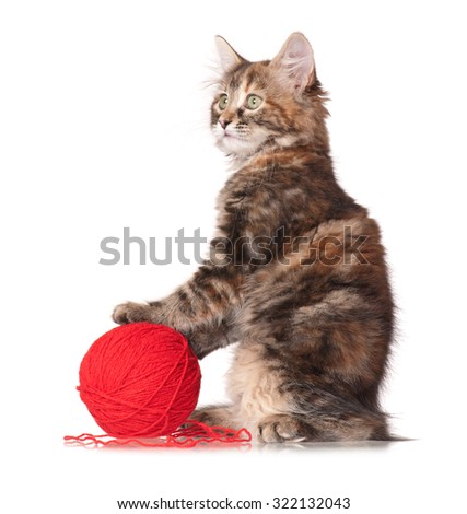 Cute little kitten with red clew isolated on white background - stock photo