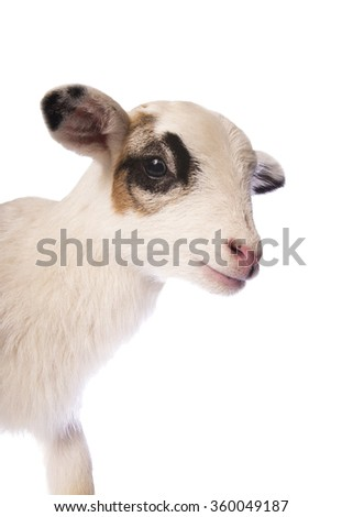 Cute little lamb side view head shot isolated on white background - stock photo