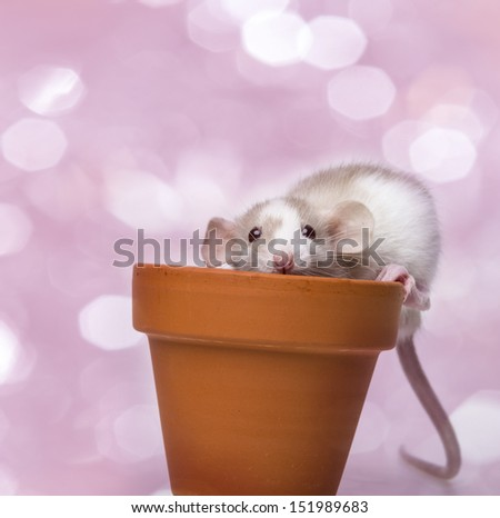 cute little mouse - pink background - stock photo