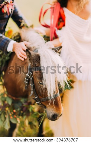 Cute little pony with wedding couple close up - stock photo