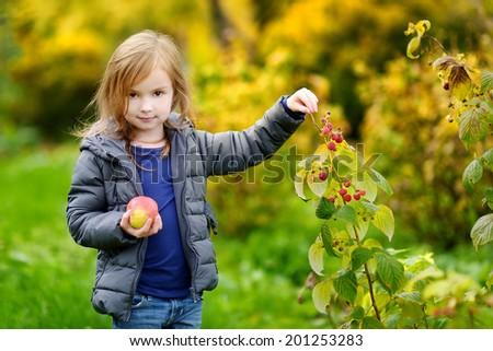 Cute little preschooler girl picking late raspberries on beautiful autumn day - stock photo