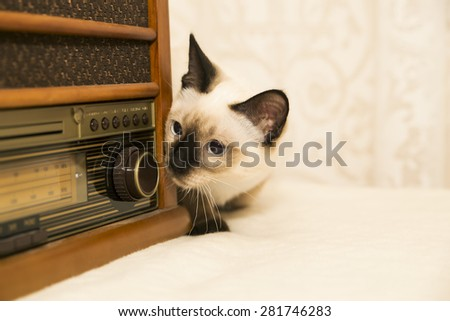 Cute little puss hunting after the music - stock photo