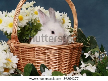 Cute little rabbit in basket with flowers - stock photo