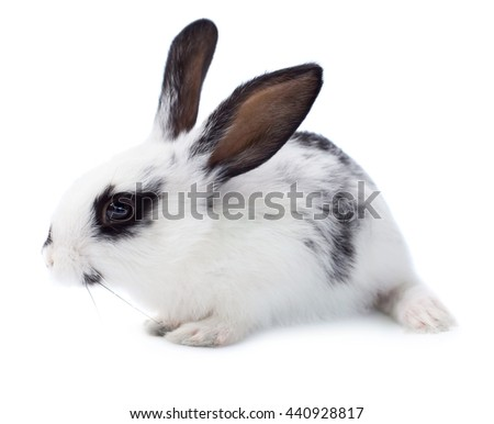 Cute little rabbit isolated on white background - stock photo
