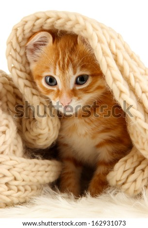 Cute little red kitten close up - stock photo