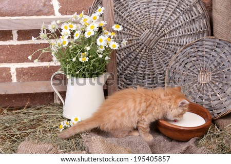 Cute little red kitten drinking milk on barn wall background - stock photo