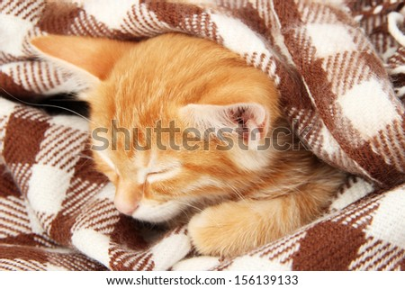 Cute little red kitten sleeps in plaid close up - stock photo