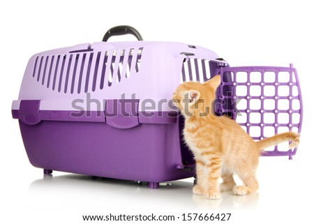 Cute little red kitten with travel plastic cage isolated on white - stock photo