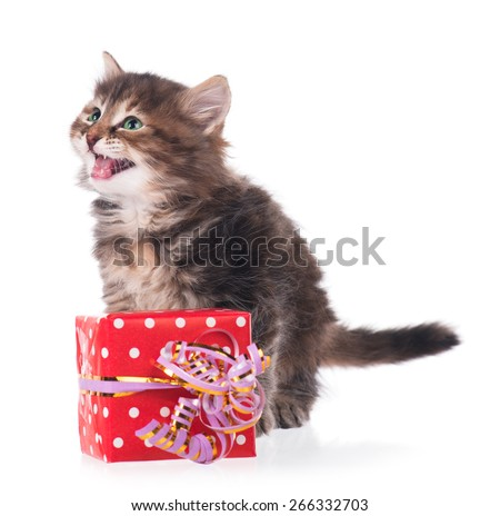 Cute little siberian kitten with gift-box isolated on white background - stock photo