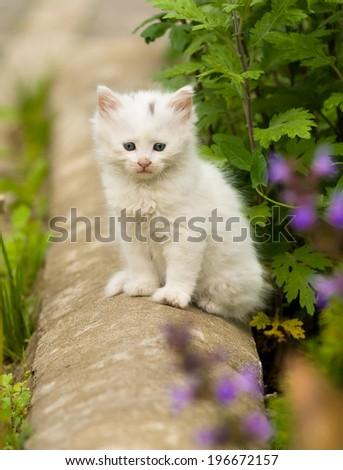 Cute little white kitten in the garden - stock photo