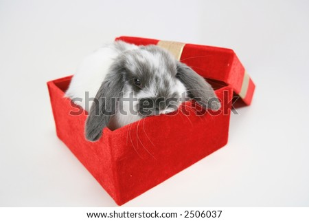 Cute lop ear bunny in gift box - stock photo