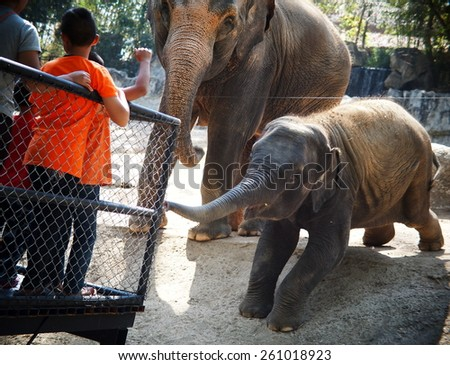 cute lovely friendly happy dark gray asian elephant family mother and a child in a zoo in THAILAND making funny posture trying to reach unidentified visitors for fruits and vegetables. - stock photo