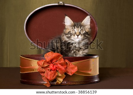 Cute Maine Coon kitten sitting inside brown gift box with bow - stock photo