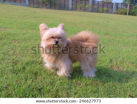 cute mixed breed dog enjoy windy in the garden - stock photo