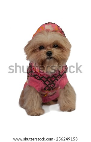 cute mixed breed dog in pink winter coat isolated in white background with clipping path - stock photo