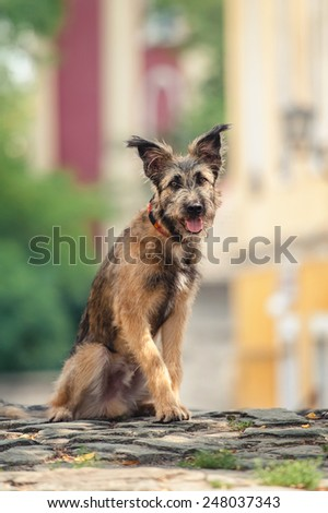 Cute mixed breed dog sitting at street of Szentendre, summer - stock photo