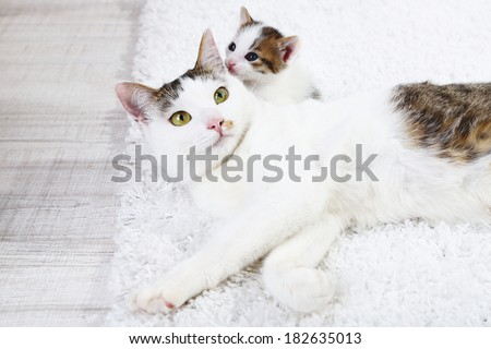 Cute mother cat and little kitten - stock photo