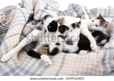 Cute mother cat and little kittens - stock photo